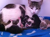 Storm + 3 Kittens