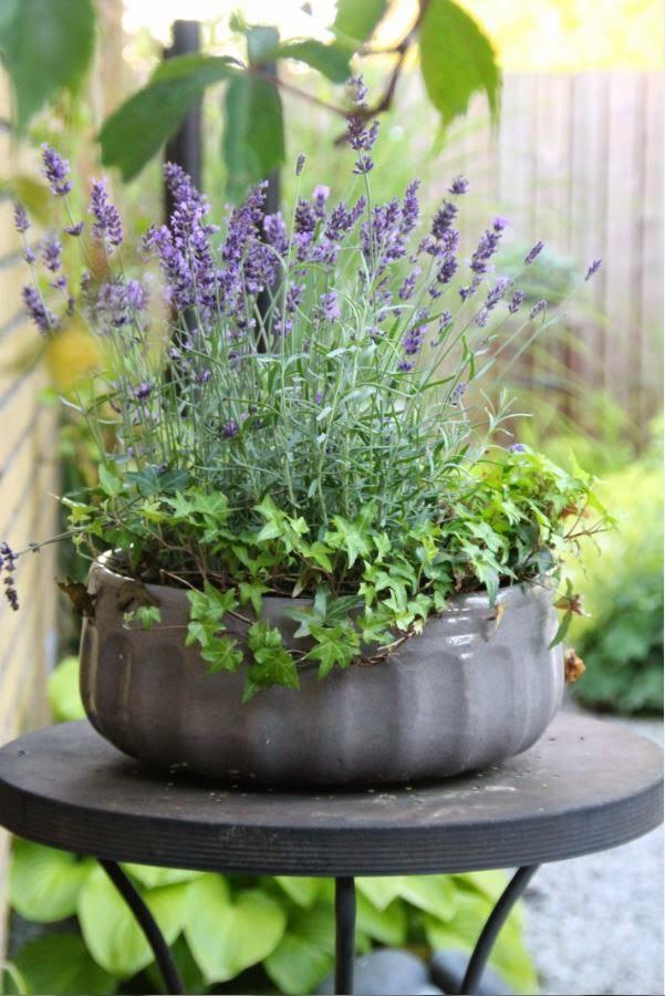Lavendel är favorit blomman :)