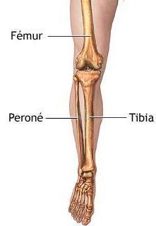 Anatomía esquelética de la pierna
