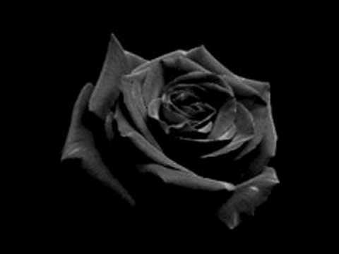 black rose drawing black rose meaning black rose tattoos black rose ...