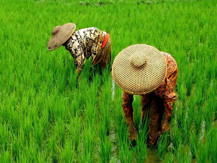 Indonesia Mundur Karena Tak Hargai Petani