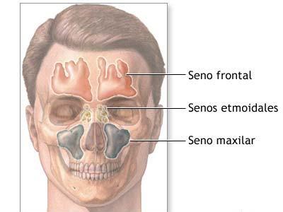 Anatomía Radiológica: octubre 2011