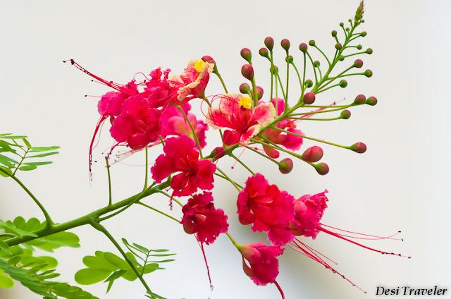 garden full of flowers