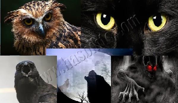 Hewan Yang Dapat Mengetahui Keberadaan Makhluk Halus