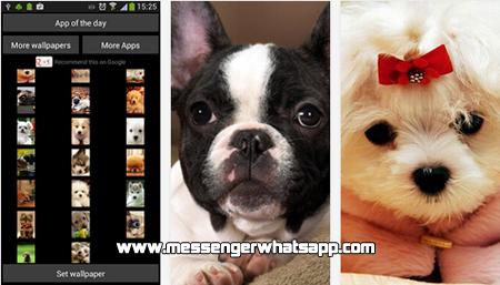 Fondos bonitos y tiernos con Puppies Wallpaper for WhatsApp