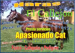 Haras El Callejon