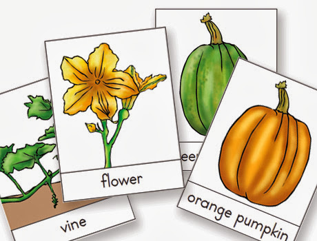 picture relating to Pumpkin Life Cycle Printable called Montessori Printable for Autumn and Halloween: The Lifetime
