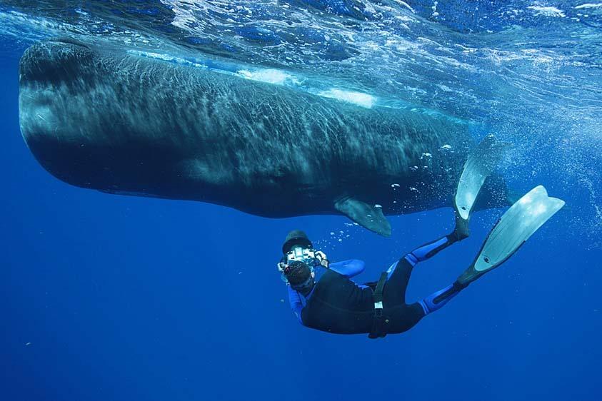 Killer whale vs sperm whale