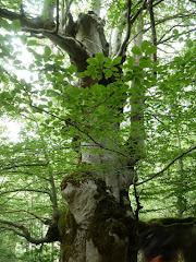 El verano, mucho calor, tiempo de helados y aire acondicionado, viva el bosque fresco y sombrío