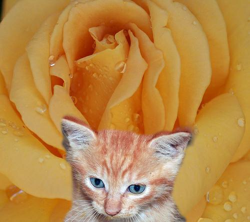 Raindrops on roses and whiskers on kittens