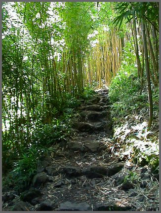 Bamboo Forest Maui2