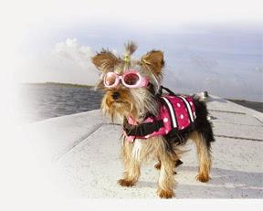 chaleco perro paws aboard en malamarshop.com