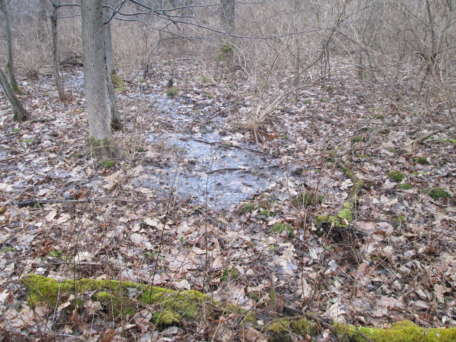 Backyard Nature Preserve : Today, the tour of Freevilles Genung Nature Preserve continues with