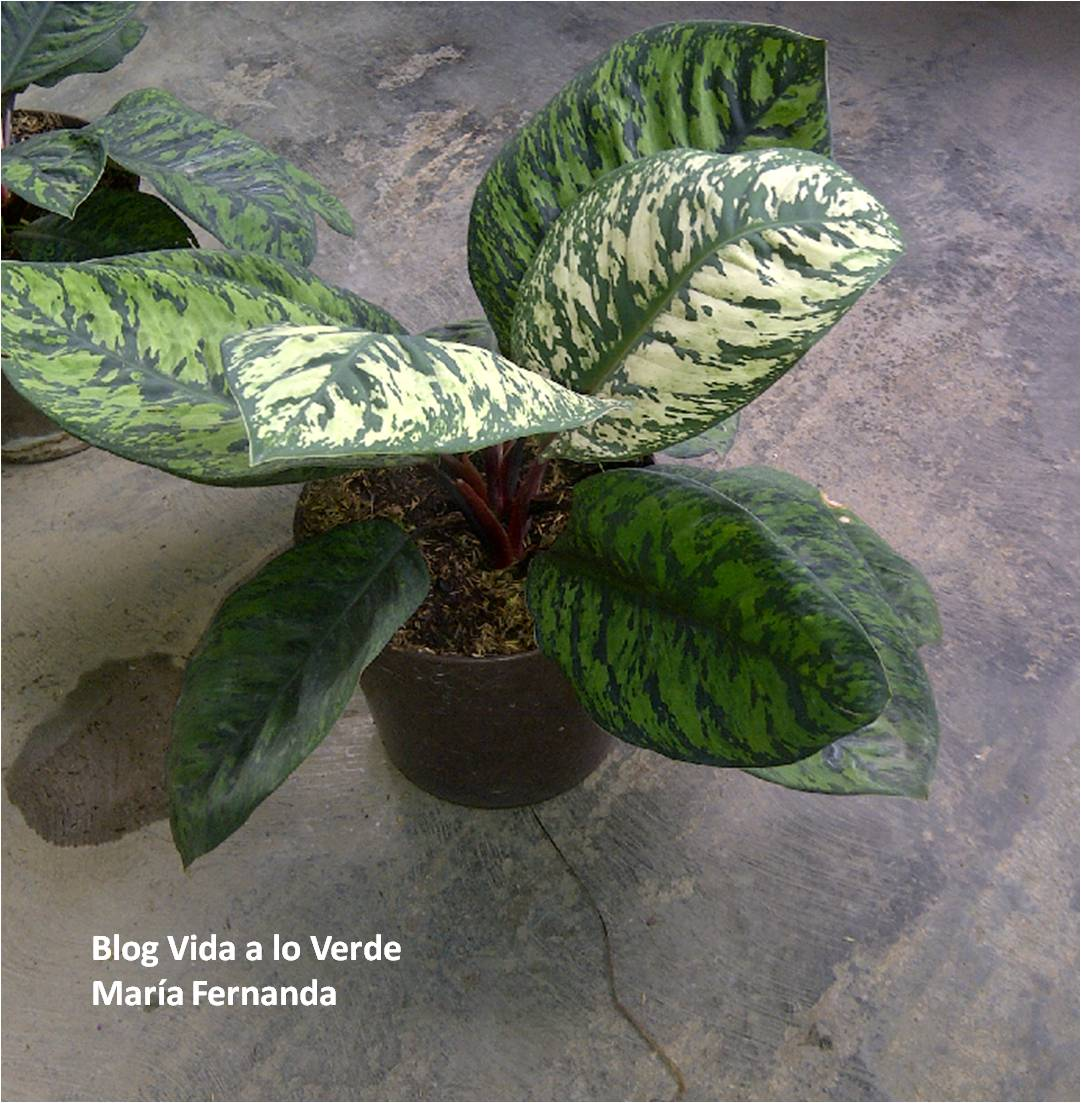 Vida a lo verde living in green qu plantas usar para arreglos de interiores arreglos con - Flores de sombra ...