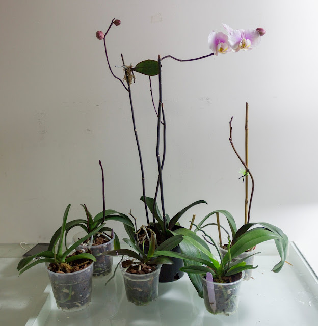 how to take care of orchids indoors after blooming