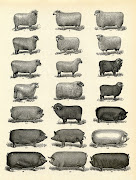 . from an antique Dictionary and shows a large grouping of Farm Animals.