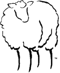 Traditional 1927 Shetland Sheep