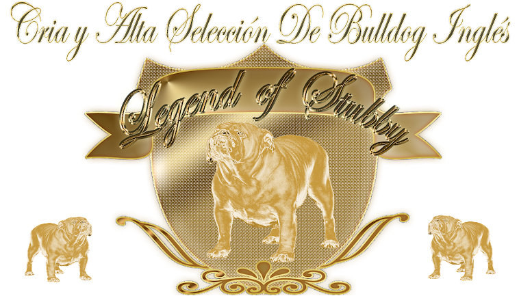 LEGEND OF STUBBY BULLDOGS . CACHORROS DE BULLDOG INGLES EN VALENCIA. CRIADORES DE BULLDOG INGLÉS.