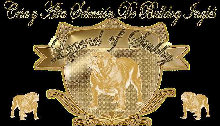 LEGEND OF STUBBY BULLDOGS . CACHORROS DE BULLDOG INGLES EN VALENCIA. CRIADORES DE BULLDOG INGLÉS.