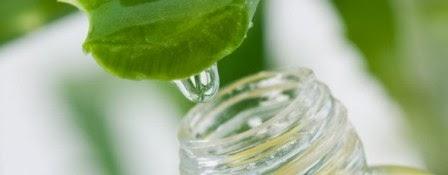 Thao gel lô hội cũng giúp làm mờ vết thâm do mụn