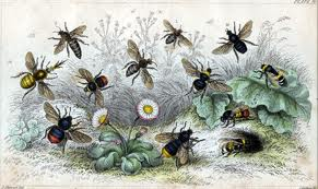 Picture of flying bees-bee history