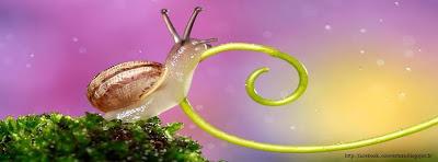 Couverture facebook escargot