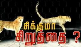Continuous Moments Of Leopard In Perambalur