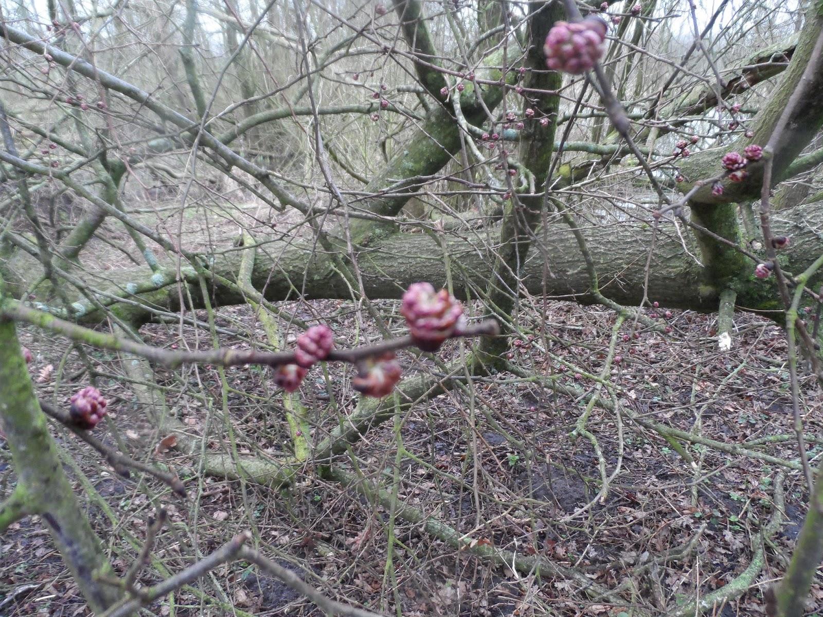 lidt forårs tegn i skoven