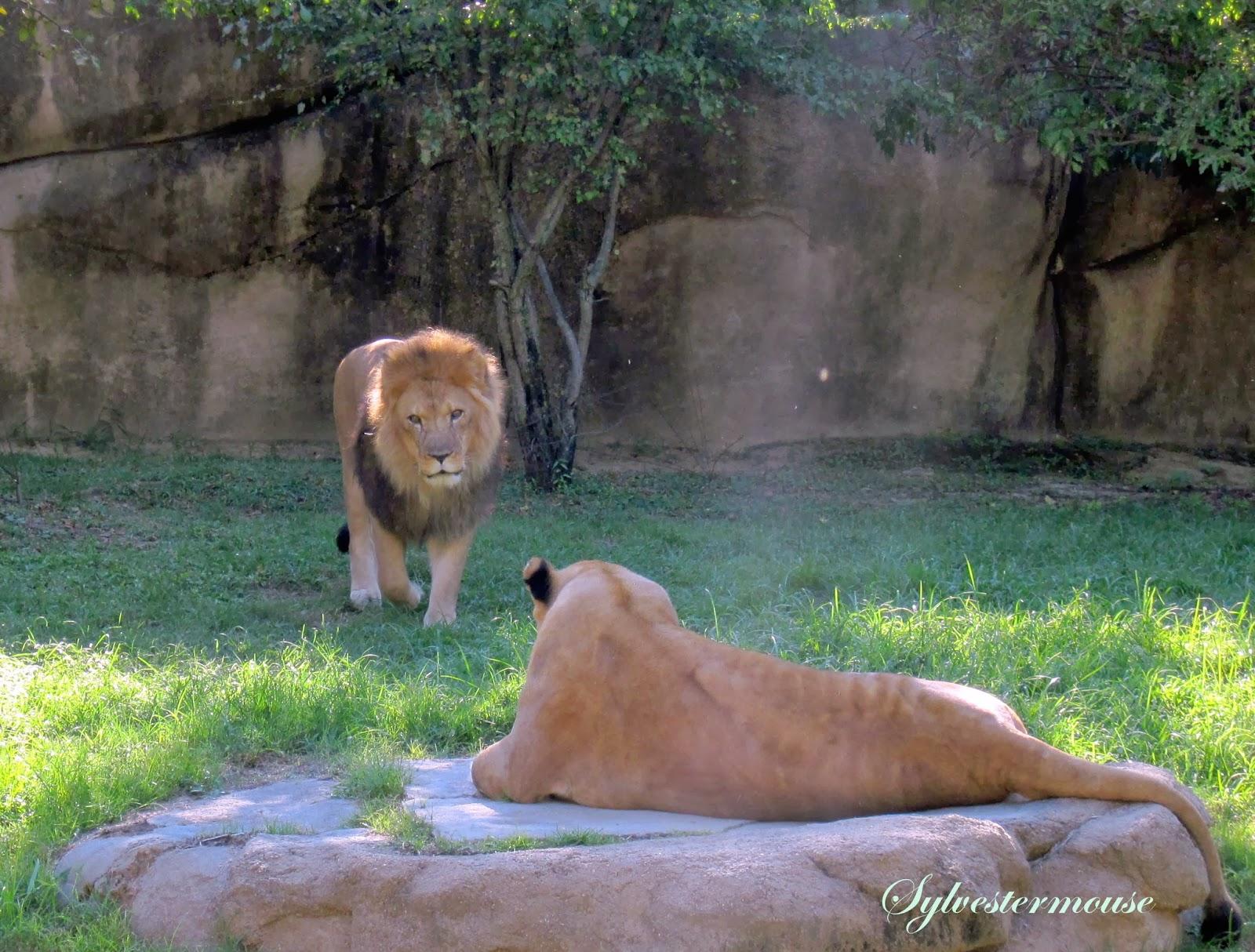 Amazing Wild Animals