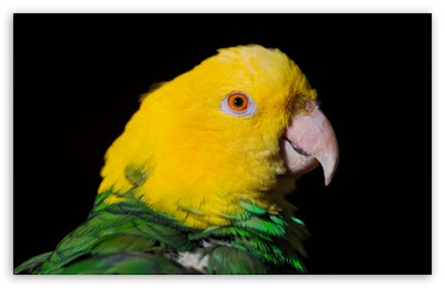 green and yellow parrot t2