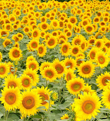 "Sunflowers stand right up and say ""Hello!"""