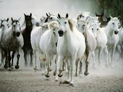 Os cavalos selvagens são diferentes; eles conhecem a sua força...