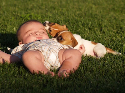 Lovely baby kid sleeping with puppies pictures to download