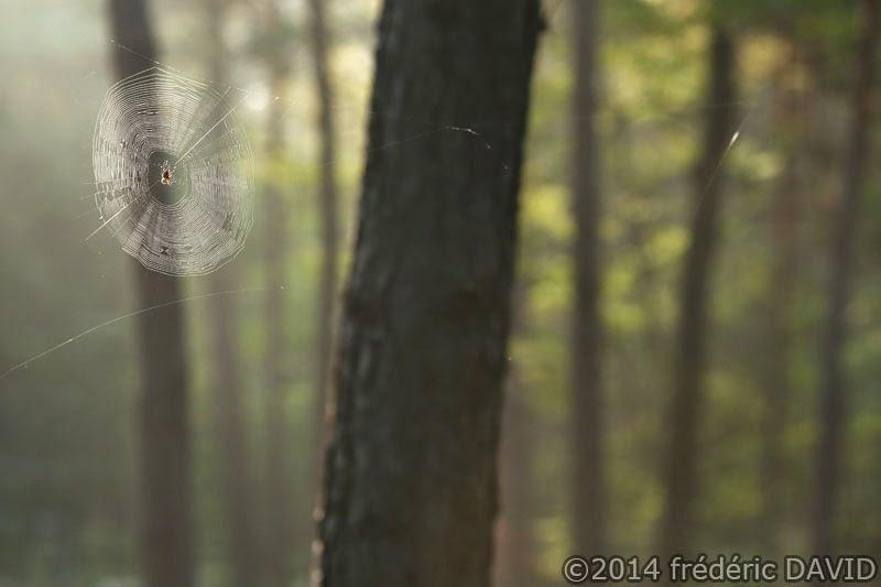toile araignée lumière forêt Fontainebleau Seine-et-Marne