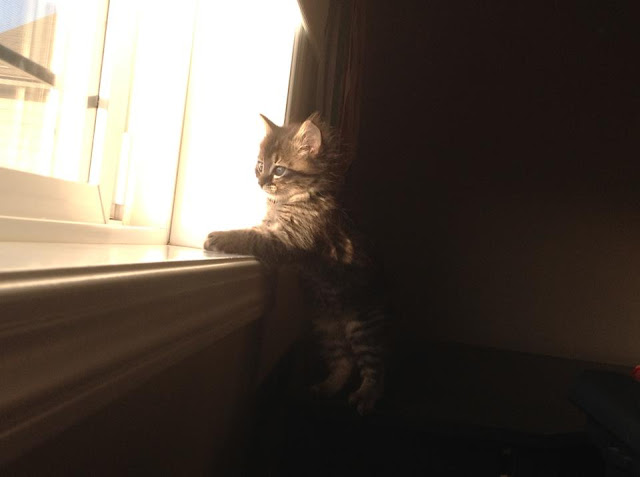 kitten on window, funny cat pictures, funny cats