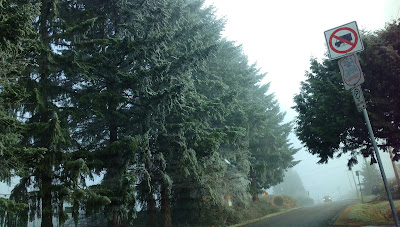 Road and trees covered in heavy frost