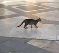 Gato vs paloma