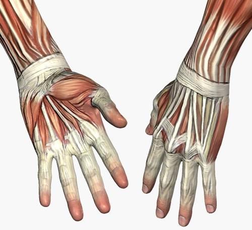 el clan de dibujo del abc: Dibujar manos