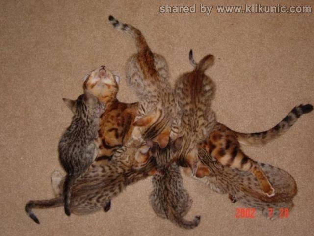 http://2.bp.blogspot.com/-kwi7Mgz8Nco/TXzFP50kPtI/AAAAAAAARFg/tszgiSYToj4/s1600/these_funny_animals_635_640_30.jpg