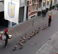 gansos desfile