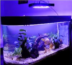 LED lighting for your particular aquarium