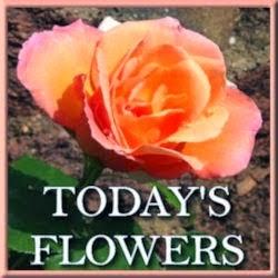 TODA'Y FLOWERS