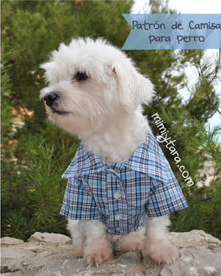 patron camisa para perro