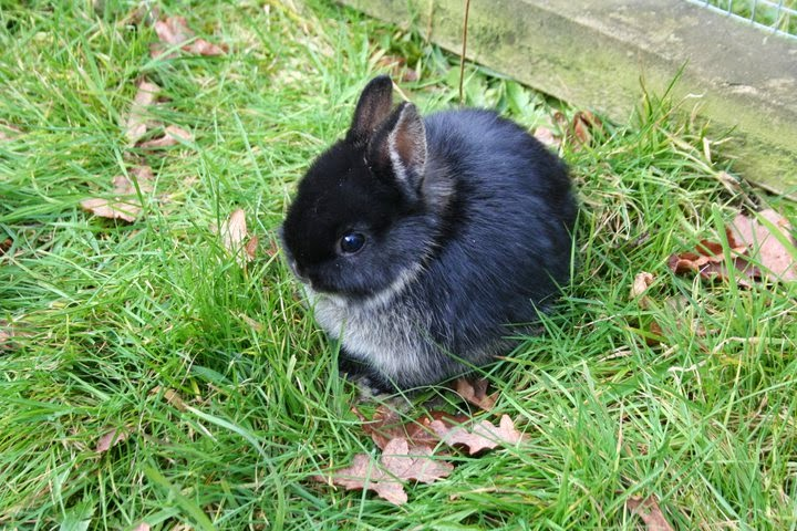 baby babe, rabbit