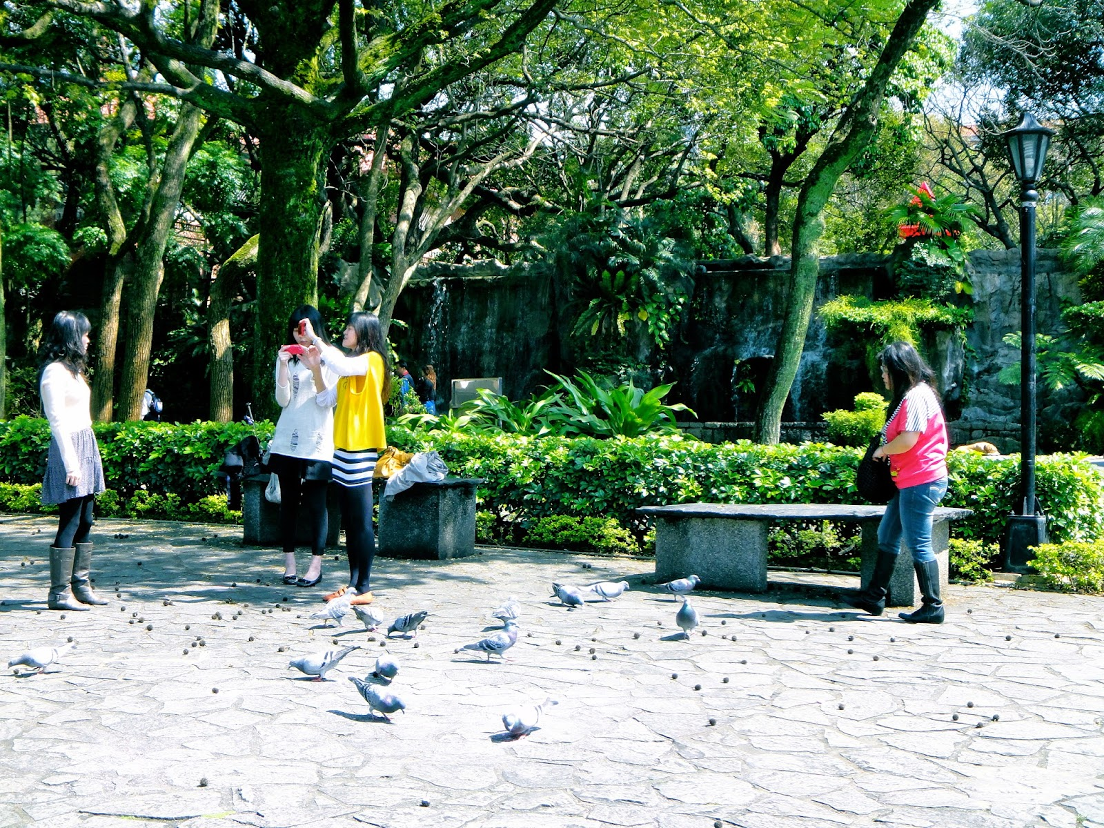 Birds feeding Aletheia University Tamsui