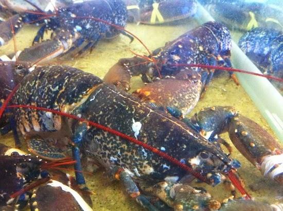 Lobster for sale in Port Vendres