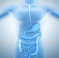 que la válvula ileocecal también bloquea estos materiales de desecho de la copia de una copia de seguridad en el intestino delgado . Se tiene la intención de ser una válvula de una vía , sólo la apertura para permitir que los alimentos procesados para pasar a través .