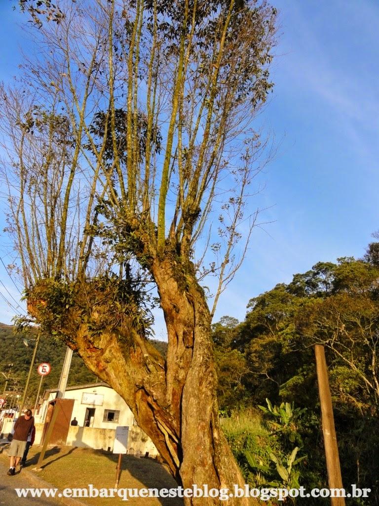 Pau da missa em Paranapiacaba