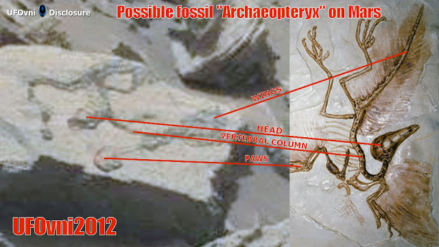 "Possible fossile ""Archaeopteryx"" sur Mars"