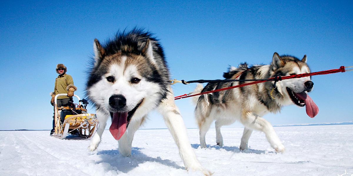 Snow Dogs 300+ Muhteşem HD Twitter Kapak Fotoğrafları